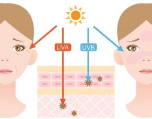 UVA - UVB damages on the skin